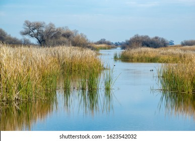 USA, California, Kern County, Kern National Wildlife Refuge. Duck habitat between reeds at this scenic waterway in the San Joaquin Valley