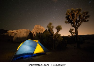 USA, California, San Bernadino County, Joshua Tree National Park: A brightly lit tent in Ryan Campground with a Joshua Tree lit in the background against a starry night sky.