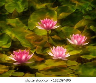 USA, California, San Diego. Water lilies with water texture added