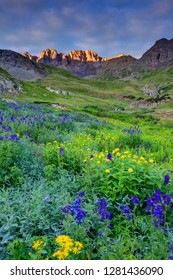 USA, Colorado. Sunrise on wildflowers in American Basin in the San Juan Mountains. Credit as: Dennis Flaherty / Jaynes Gallery / DanitaDelimont.com