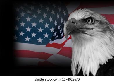 USA flag with american eagle eagle