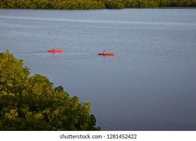 USA, Florida, Naples, Clam Bay kayak. in Mangroves.