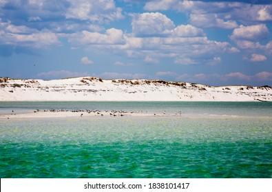 USA, Florida. Pensacola, Sand dunes along the coast of Pensacola Beach.