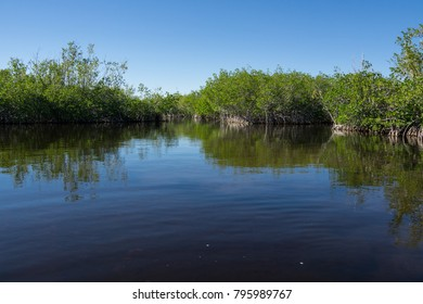 USA, Florida, Reflecting water and mangrove woods in everglades national park