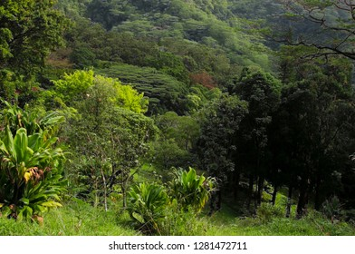 USA, Hawaii, Oahu, Honolulu. Lyon Arboretum landscape across Manoa Valley.