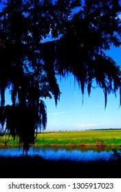 USA, Louisiana, Cameron Parish, Creole Nature Trail, National Scenic Byway, Sabine National Wildlife Refuge, Louisiana Outback