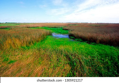 USA, Louisiana, Cameron Parish, Creole Nature Trail, National Scenic Byway, Sabine National Wildlife Refuge, Wetland Walkway