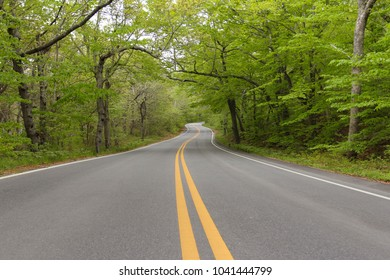 USA Massachusetts Cape Cod - Regional winding road divided by solid yellow surrounded by lush green trees and dark tree trunks and branches