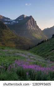 USA, Montana, Glacier National Park. Cannon Mountain and fireweed in valley.