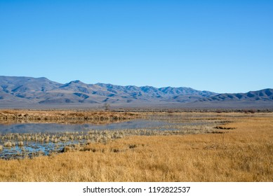 USA, Nevada, Churchill County, Stillwater National Wildlife Refuge. A field of golden grasses covering this seasonally inundated wetland.