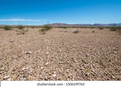 USA, Nevada, Clark County, Gold Butte National Monument, A barren expanse of Mojave Desert Pavement - a soil surface layer of closely packed  rock fragments