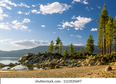 USA, Nevada, Washoe County, Sand Harbor State Park: Tall, straight pine trees lit by golden hour sun at Sand Harbor Beach.
