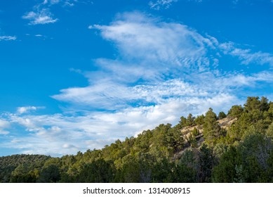 USA, Nevada, White Pine County. White Pine Range, Cathedral Fire. Puffy white clouds and Mostly Sunny Skies above a Pinyon Juniper Woodland in Eastern Nevada.