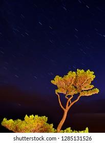 USA, Oregon, Oceanside. Pine tree against star trails. Credit as: Steve Terrill / Jaynes Gallery / DanitaDelimont.com