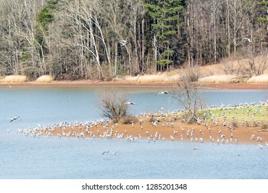 Usa, Tennessee, Birchwood, Hiwassee Wildlife Refuge migratory stop for Sandhill Cranes