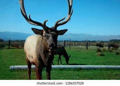 Game Farm Stock Photos, Images & Photography | Shutterstock