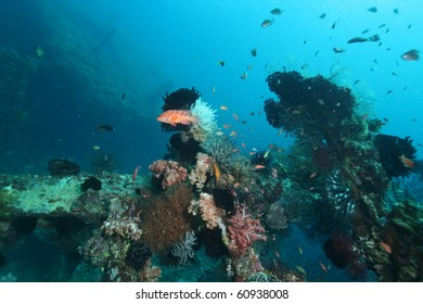 USAT Liberty shipwreck