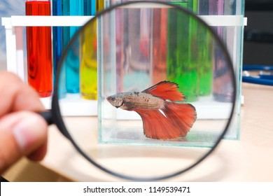 Use a magnifying glass to see the bite fish in a glass cabinet placed on a wooden table.In the science room we lab