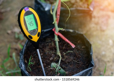 Use soil PH meter to check the PH value