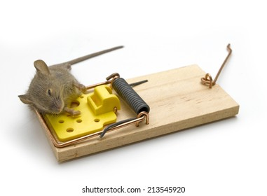 Used Mousetrap