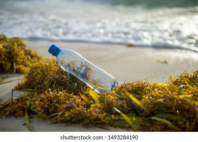 A used plastic water bottle sits on a bed of sargassum seaweed washed onto a tropical beach, highlighting the worldwide crisis of plastic pollution on even the most remote islands