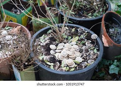 Used tea bags used for ecological fertilization of flower plants in flowerpot