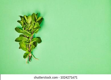 Useful herbs. Mint.Fragrant. Green. Freshness. For your design.