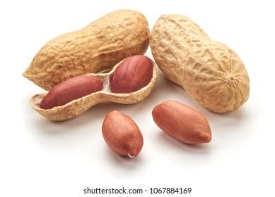 Useful peanut, close-up, isolated on white background.