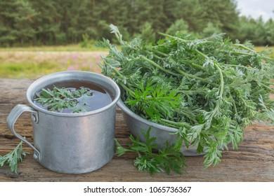 Useful tea from wormwood is used in folk medicine