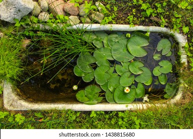 Useless bath is reused as a mini pond with water lilies and other plants. Zero Waste Lifestyle. Turn your old bath into a home for aquatic plants and animals in your backyard. Backyard project
