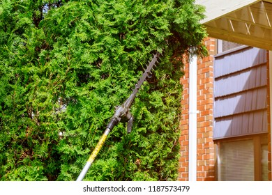 Using hedge trimmer to trim the bushes trimming plants in her garden