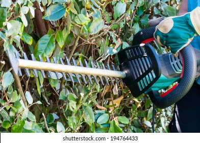 Using a hedge trimmer to trim the bushes