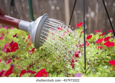 Using a red watering can to water flowers at home in the garden