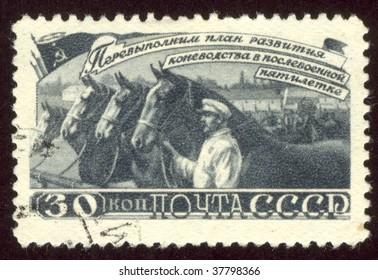 USSR -CIRCA 1946: Herd of collective-farm horses, circa 1946.