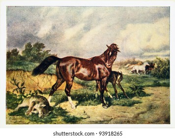 USSR - CIRCA 1958: Reproduction of antique postcard shows horse had killed a wolf, protecting the foal, circa 1958