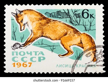 USSR - CIRCA 1967: a stamp printed by USSR shows red fox, series animal, circa 1967