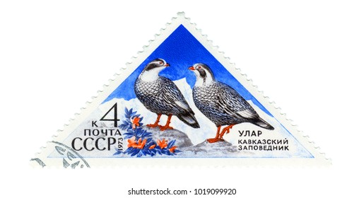 """USSR - CIRCA 1973: Postage stamp printed in USSR shows Caucasian ular (lat. Tetraogallus caucasicus). The series """"Caucasus Nature reserve"""". circa 1973"""