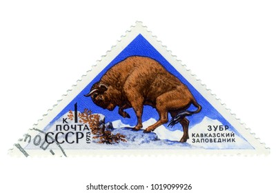 """USSR - CIRCA 1973: Postage stamp of the series """"Fauna - Nature Reserves"""" with a picture of Bison, printed in USSR, circa 1973"""