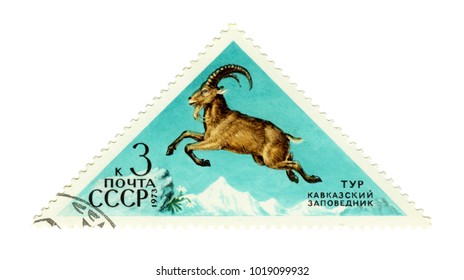 """USSR - CIRCA 1973: Postage stamp of the series """"Fauna - Nature Reserves"""" with a picture of West Caucasian tur (Capra caucasica), printed in USSR, circa 1973"""