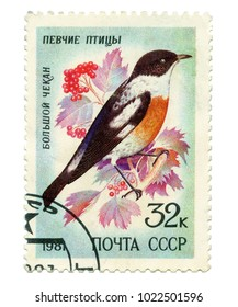 USSR - CIRCA 1981: a post stamp printed in USSR, shows the bird Big Gave, songbirds, CIRCA 1981
