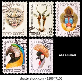 USSR - CIRCA 1984: A set of postage stamps printed in USSR shows wild Animals, series Moscow zoo, circa 1984