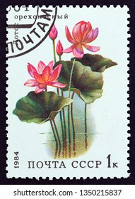 """USSR - CIRCA 1984: A stamp printed in USSR from the """"Aquatic Flowers"""" issue shows Lotus (Nelumbo nucifera), circa 1984."""