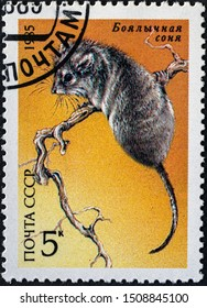 USSR - CIRCA 1985: A stamp printed in the USSR showing Hazel Dormouse, circa 1985