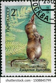 USSR - CIRCA 1985: A Stamp printed in USSR shows image of a Bukhara shrew from the series Endangered Wildlife, circa 1985