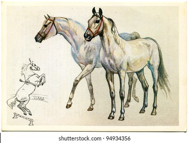 USSR - CIRCA 1988: Postcard printed in the USSR shows draw by A.Glukharev Terek breed  horse, circa 1988