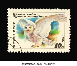 USSR - CIRCA 1990: A stamp printed in USSR showing birds circa 1990