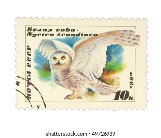 USSR - CIRCA 1990: A stamp printed in USSR showing owl circa 1990