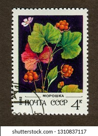 USSR stamp - CIRCA 1982: A stamp printed in USSR shows cloudberries illustration.