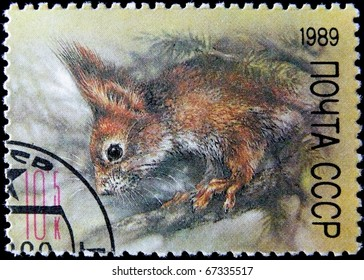 USSR-CIRCA  1989: A post stamp printed in USSR shows squirrel, series, circa 1989