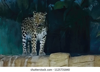 Usti nad Labem, Czech republic - June 30, 2018:  Mariansky most bridge over river Labe in czech city Usti nad Labem during summer dayLeopard Amur is looking on tourist in his house in ZOO